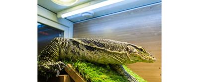 How to Light a Herptile's Cage