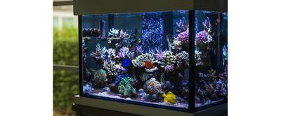 Aquarium Décor