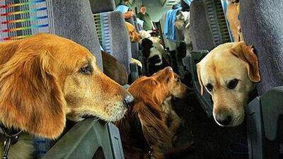 dogs on plane 16:9