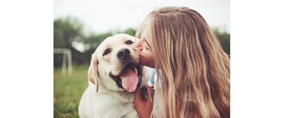 Pet Wellness and Healthcare