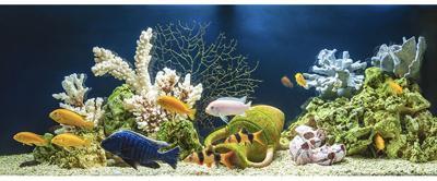 Marine Livestock Report
