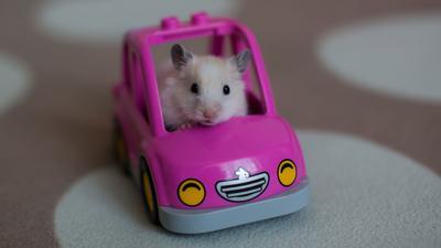 cute hamster riding in a pink car, favorite pet