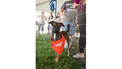 Pet Food Express Pet Fair