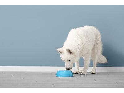 Raw Diets for Pets