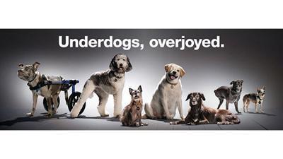 Subaru of America Underdogs