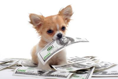 How Much Are Pet Owners Spending?