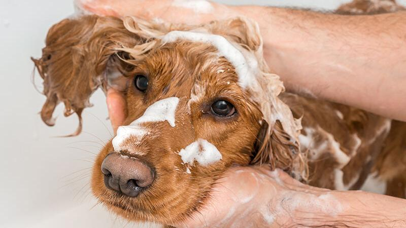 Skin & Coat Care Products for Dogs
