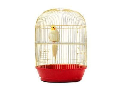 The Latest Trends in Birdcages