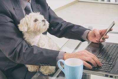 Working with dog at home