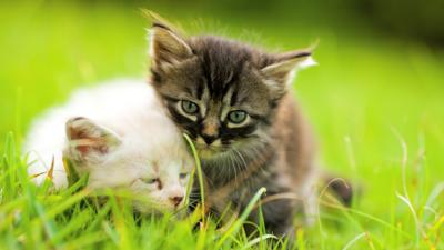 Finding Eco-Friendly Cat Litter