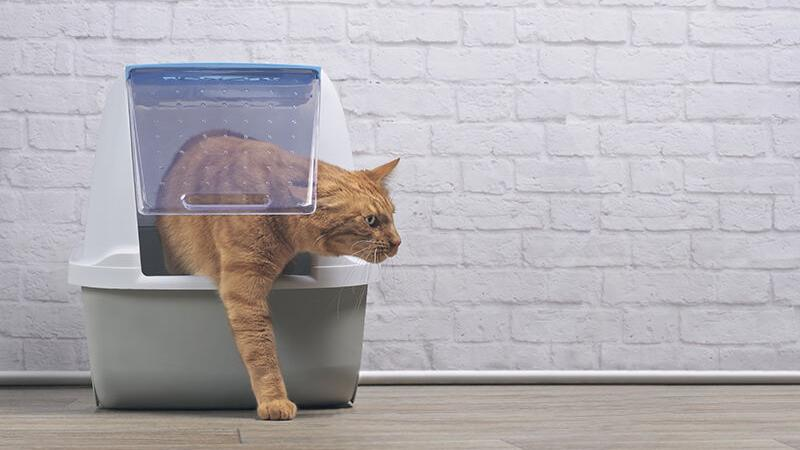 The Latest Developments in Cat Litter