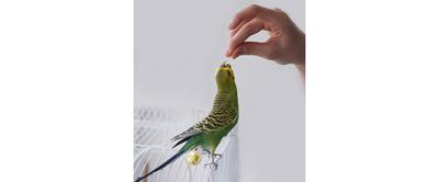 Products For Parrots