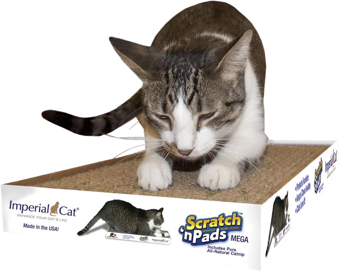 SB1 ICmegacatscratcher.jpg
