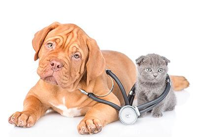 Dog and Cat Health