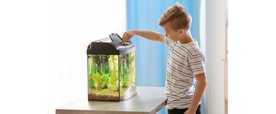 Starter Kits for Fish Owners