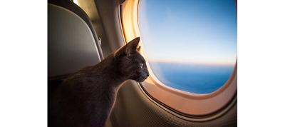 Preparing To Travel With Pets