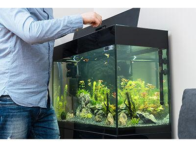 A Focus on Aquarium Maintenance Products