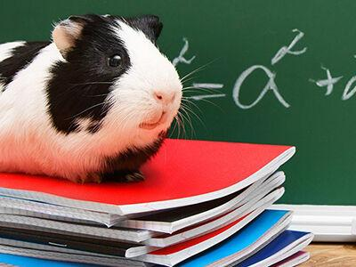 The Positive Impact of Classroom Pets