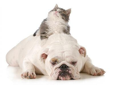 The Biggest Myth About Cats and Dogs Dispelled