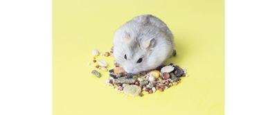 Small Animal Nutrition