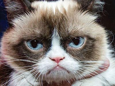 R.I.P. Grumpy Cat & Lil Bub
