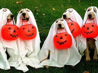 Halloween Pet Spending