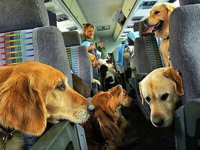 dogs on a plane.jpg