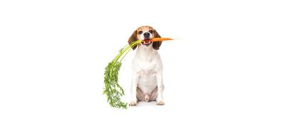 Vegan and Vegetarian Pet Diets
