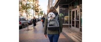 A Pet Industry Pillar