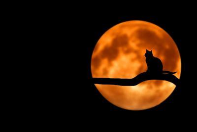 american humane halloween stock