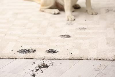 How to Profit from Pet Cleanup Products
