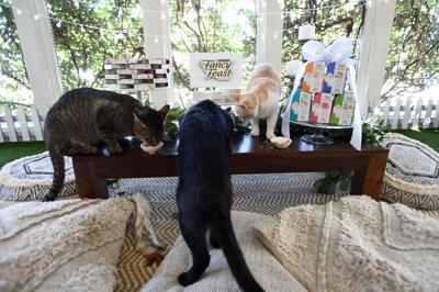 Fancy Feast Hosts Party for Adoptable Cats