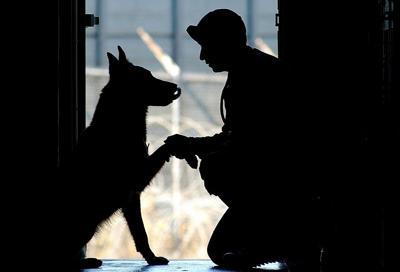 Pet Supermarket Raises Funds for U.S. War Dogs Association