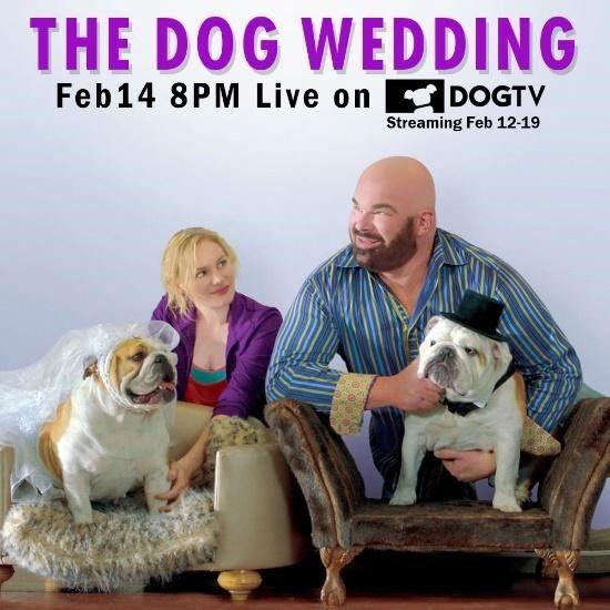 DogTV movie trailer poster