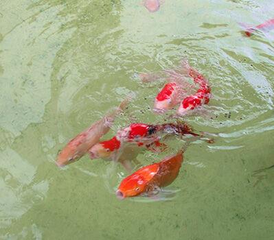 International Waters: Spanish Invasive Alien Species Update