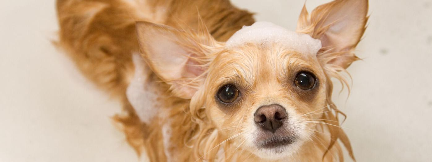 Grooming Salons Keep Pet Owners Coming Back with These Treatments