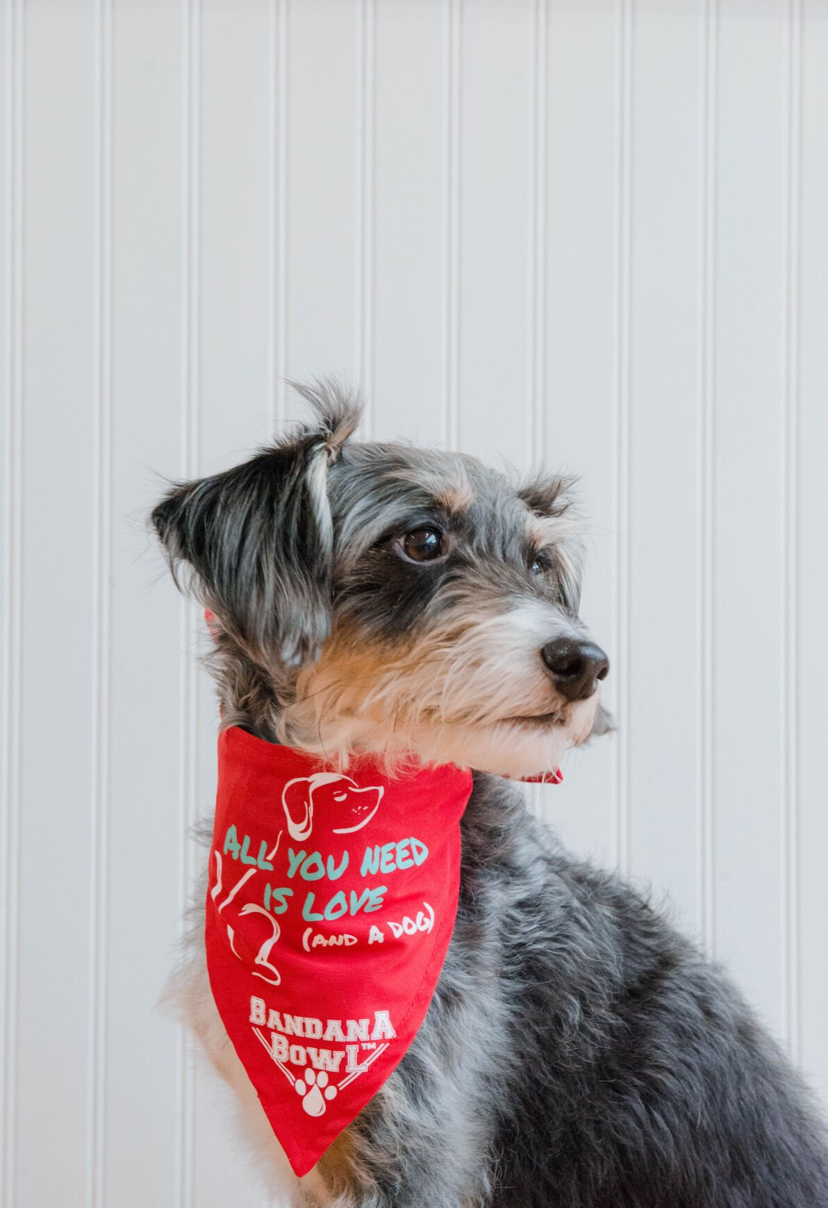 The Bandana Bowl lets dogs carry a water bowl on their necks during walks.