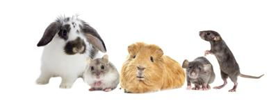Small Mammal Housing Faces Headwinds