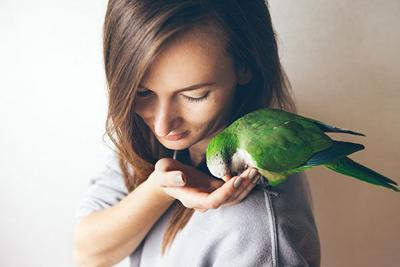 The Simple Strategies Pet Retailers Can Use to Promote Bird Foods