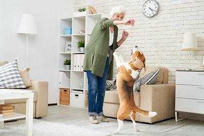 Why Pet Owners Want More From Treats and Chews