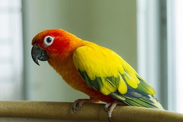 A Host of Factors Are Impacting the Exotics Pet Trade, Experts Say