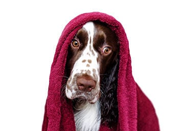 Skin and Coat Products Solve Problems for Pet Owners