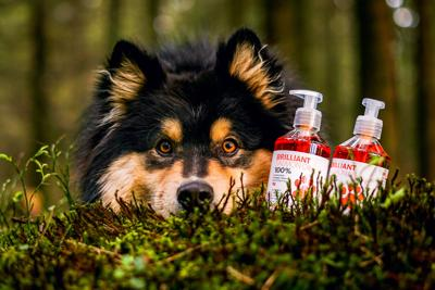 Brilliant Salmon Oil Partners With Pet Palette for National Distribution