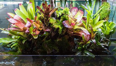 Hobbyists Embrace Terrariums and Paludariums