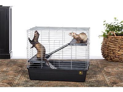 Adult Ferret Home & Travel Carrier