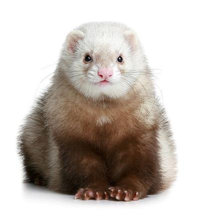 Sizzling Stock: Small Mammal Products