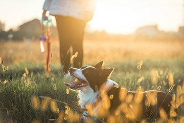 CBD Continues to Make Headway in Pet Market