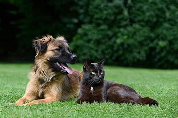 CBD, New Ingredients Invigorate Pet Supplement Category
