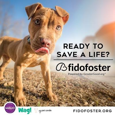 Halo and GreaterGood.org Celebrate FidoFoster.org Launch with Contest