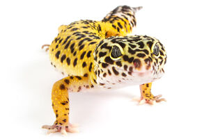 Q4 FOCUS: Herp Products